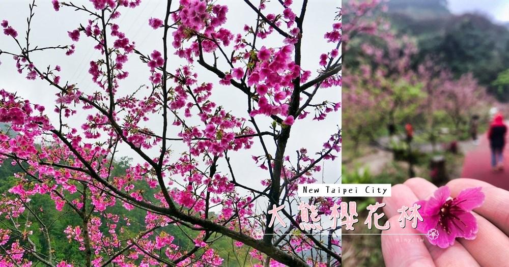 bear_cherry_blossoms_00