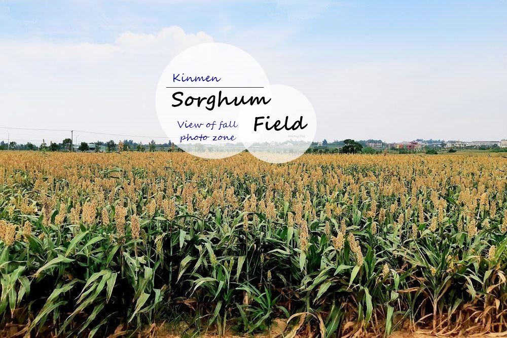 sorghum-field-00
