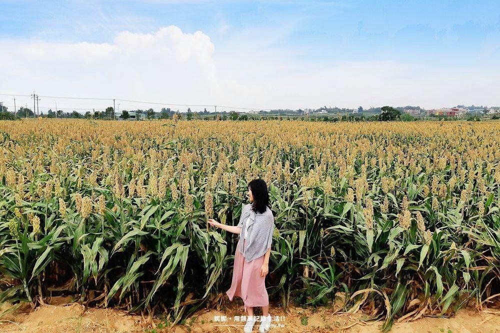 sorghum-field-012